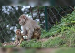 Vacina contra o HIV poderá entrar em fase clínica após testes em primatas